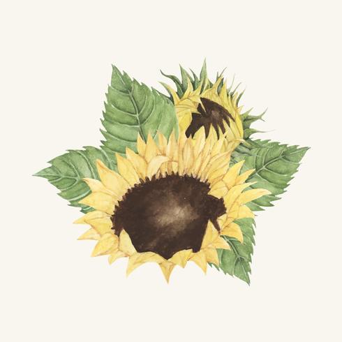 Hand drawn sunflower isolated on beige background