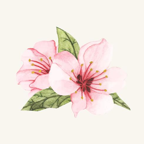 Hand drawn flower isolated