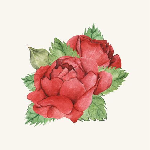 Hand getrokken rode roos geïsoleerd