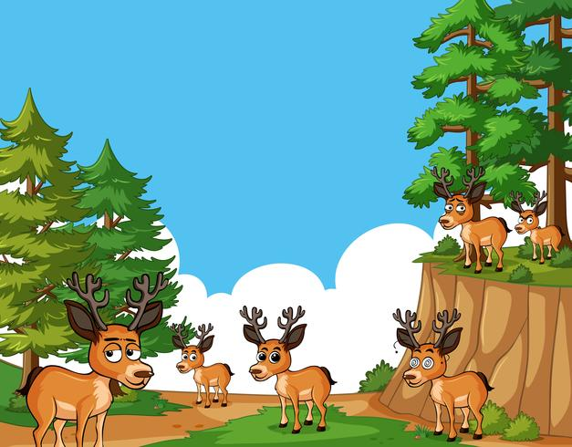Deers living in forest