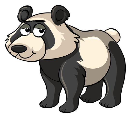Sad panda on white background