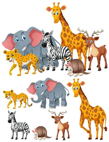 Different kinds of wild animals