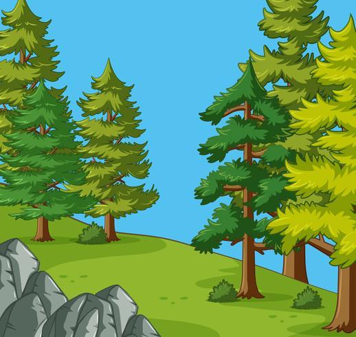 Dennenbomen op de camping