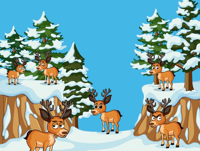 Many deers in snow mountain