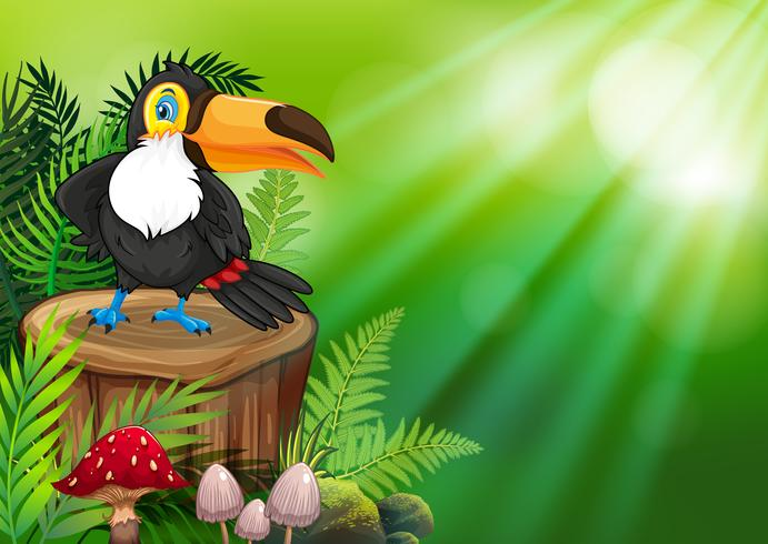 Toucan on nature green background