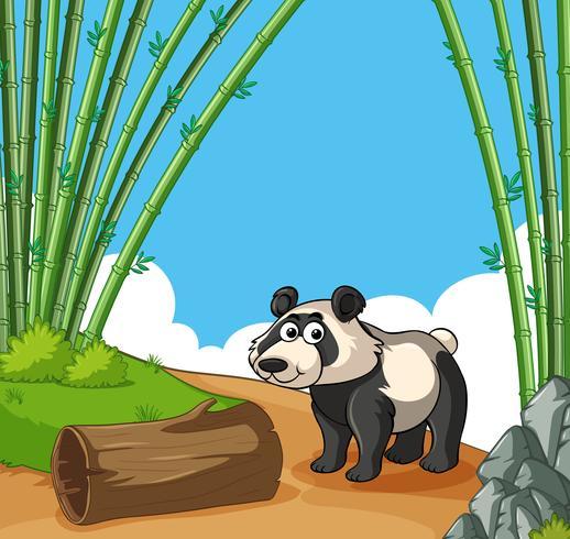 Panda felice nella foresta di bambù