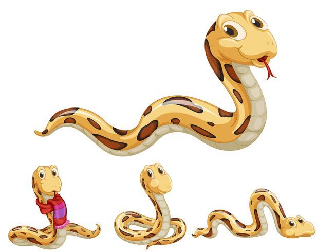 Snake series