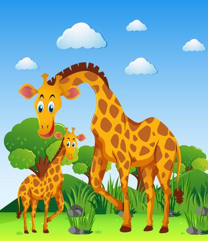 Dos jirafas en el campo. vector