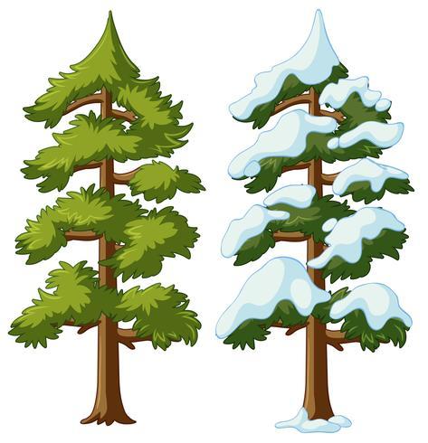 Dos pinos con y sin nieve.