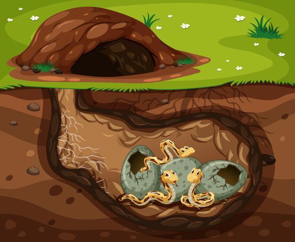 Eine Schlange, die unter dem Loch lebt