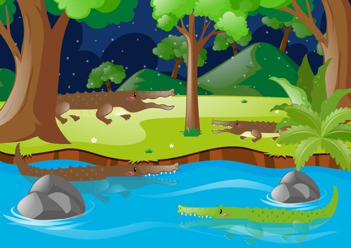 Krokodiler i floden och på land