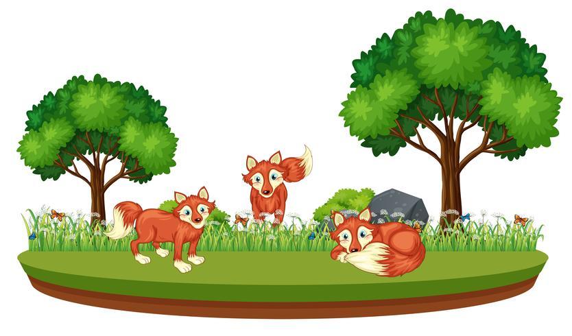Fox in der Naturlandschaft