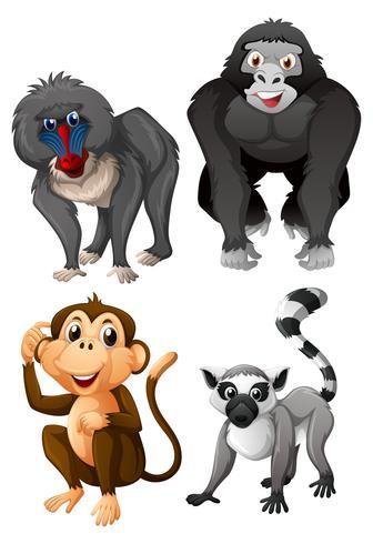 Vier Arten von Affen auf weißem Hintergrund