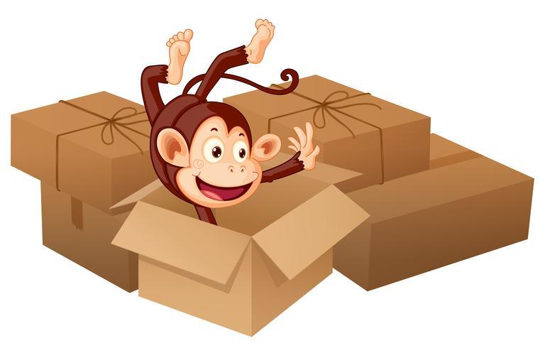 Un singe souriant et des boîtes