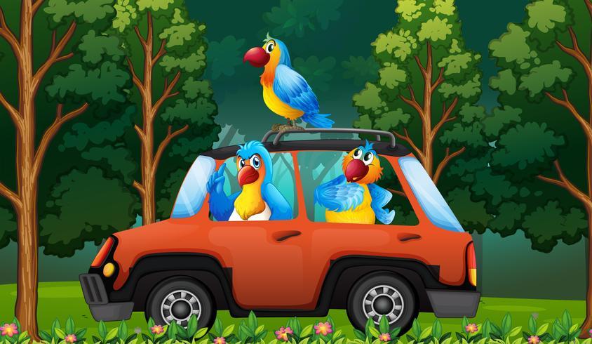 Ein Gruppenpapagei auf dem Auto