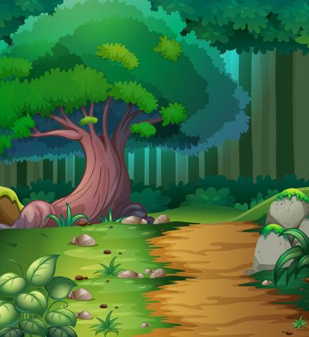 Forest scene with hiking track