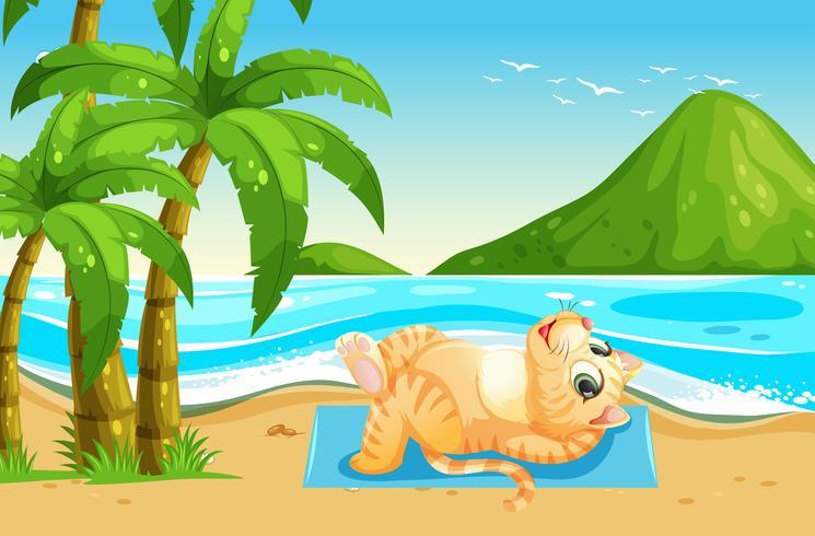 Un gato en vacaciones de verano.