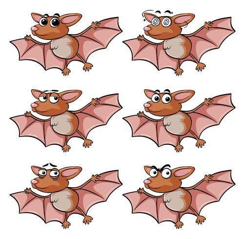 Bat avec différentes expressions faciales