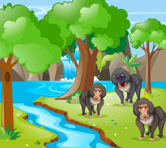 Macacos babuínos na floresta