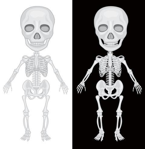 Squelette sur fond noir et blanc
