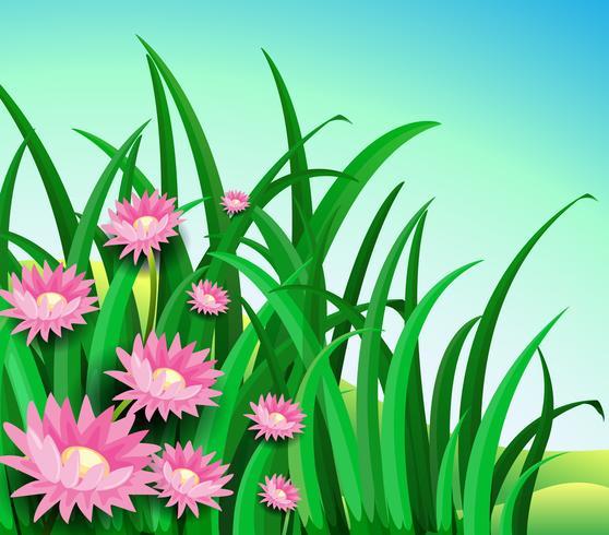 A garden with daisy flowers vector