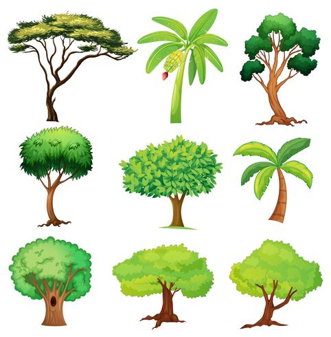 Divers arbres