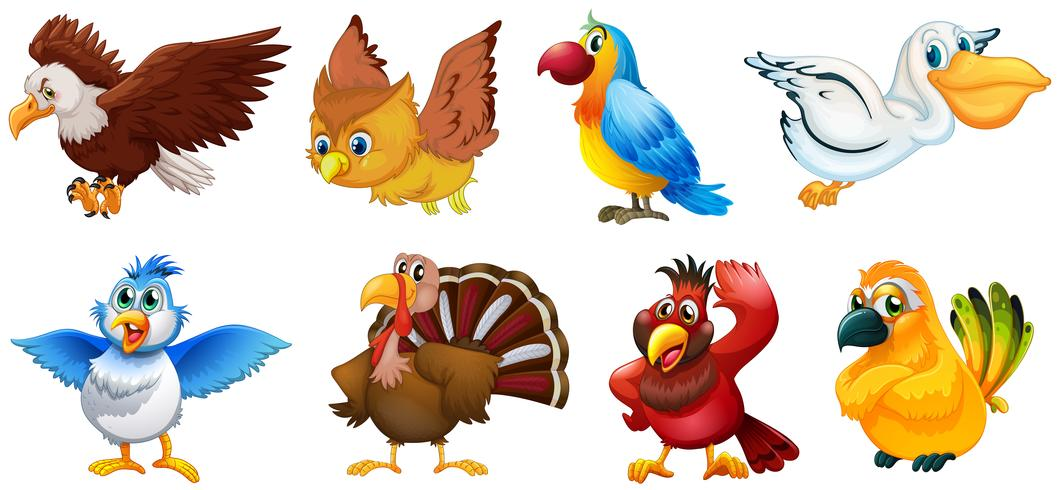 Different types of birds vector