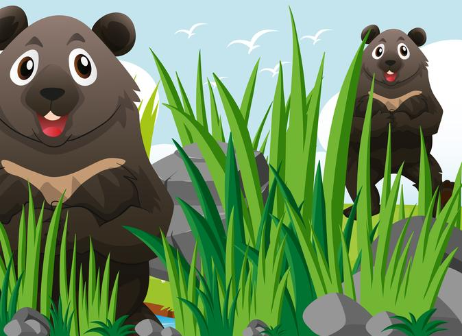 Deux grizzlis sur l'herbe