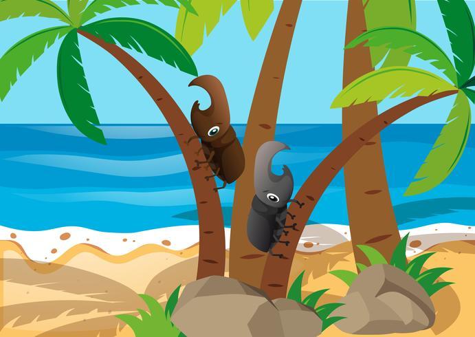 Twee kevers die de boom beklimmen