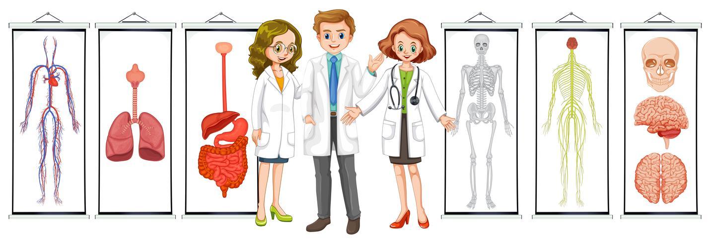 Tres doctores y diferentes esquemas del sistema humano. vector