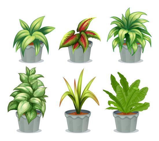 Plantas de hojas verdes