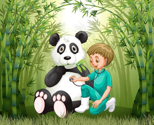 Medico veterinario e panda nella foresta di bambù