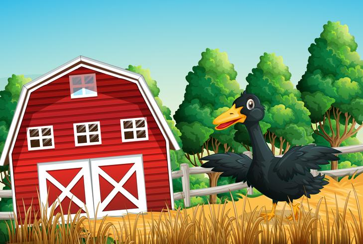 Un pato en la escena de la granja