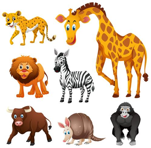 Different types of jungle animal vector