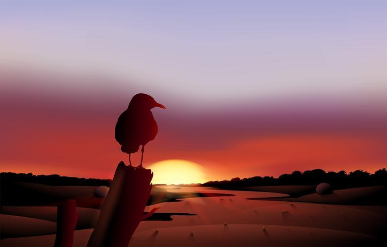 Ein Vogel in einer Sonnenuntergangansicht der Wüste
