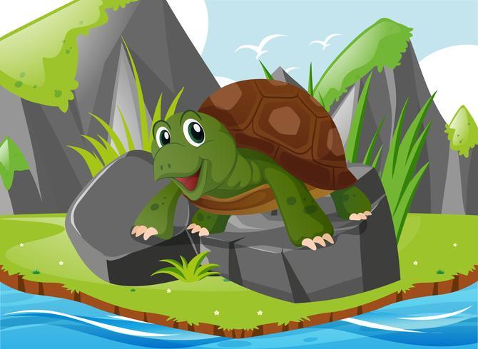Nette Schildkröte, die auf Felsen steht