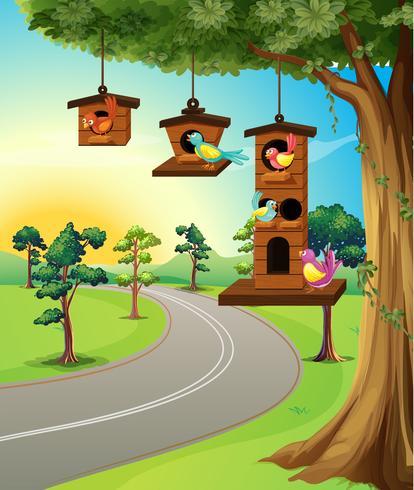 Pássaros, em, birdhouse, ligado, árvore