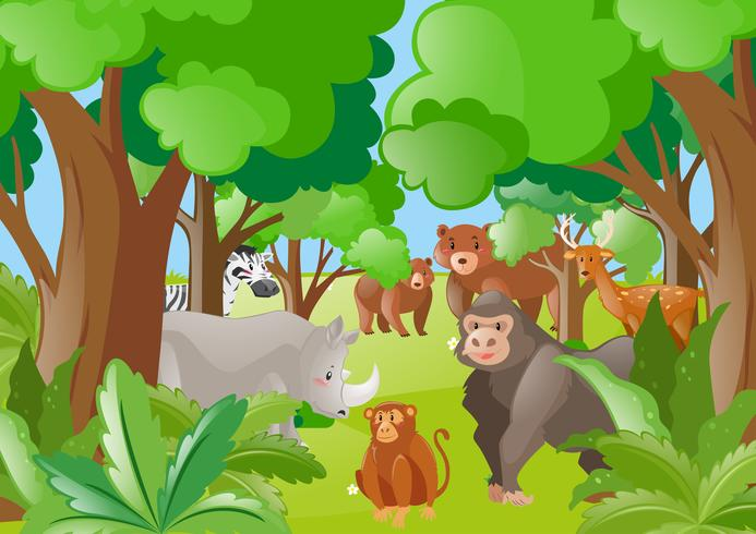 Diferentes animales salvajes en el bosque.