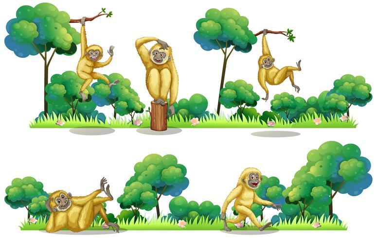 Gibbons som bor i skogen