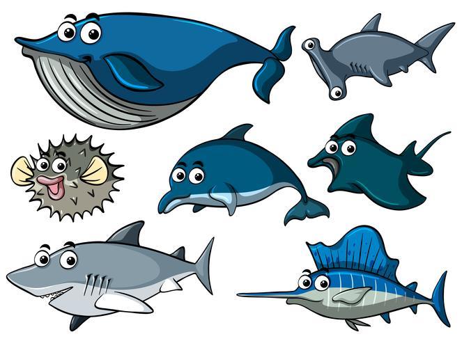Diferentes tipos de tubarões