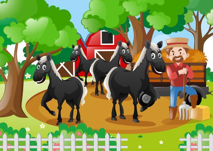 Fazendeiro e cavalos pretos no terreiro