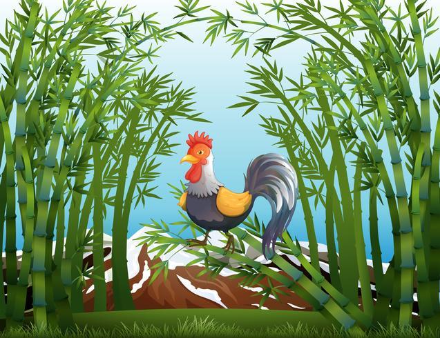 Un gallo en el bosque de bambú.