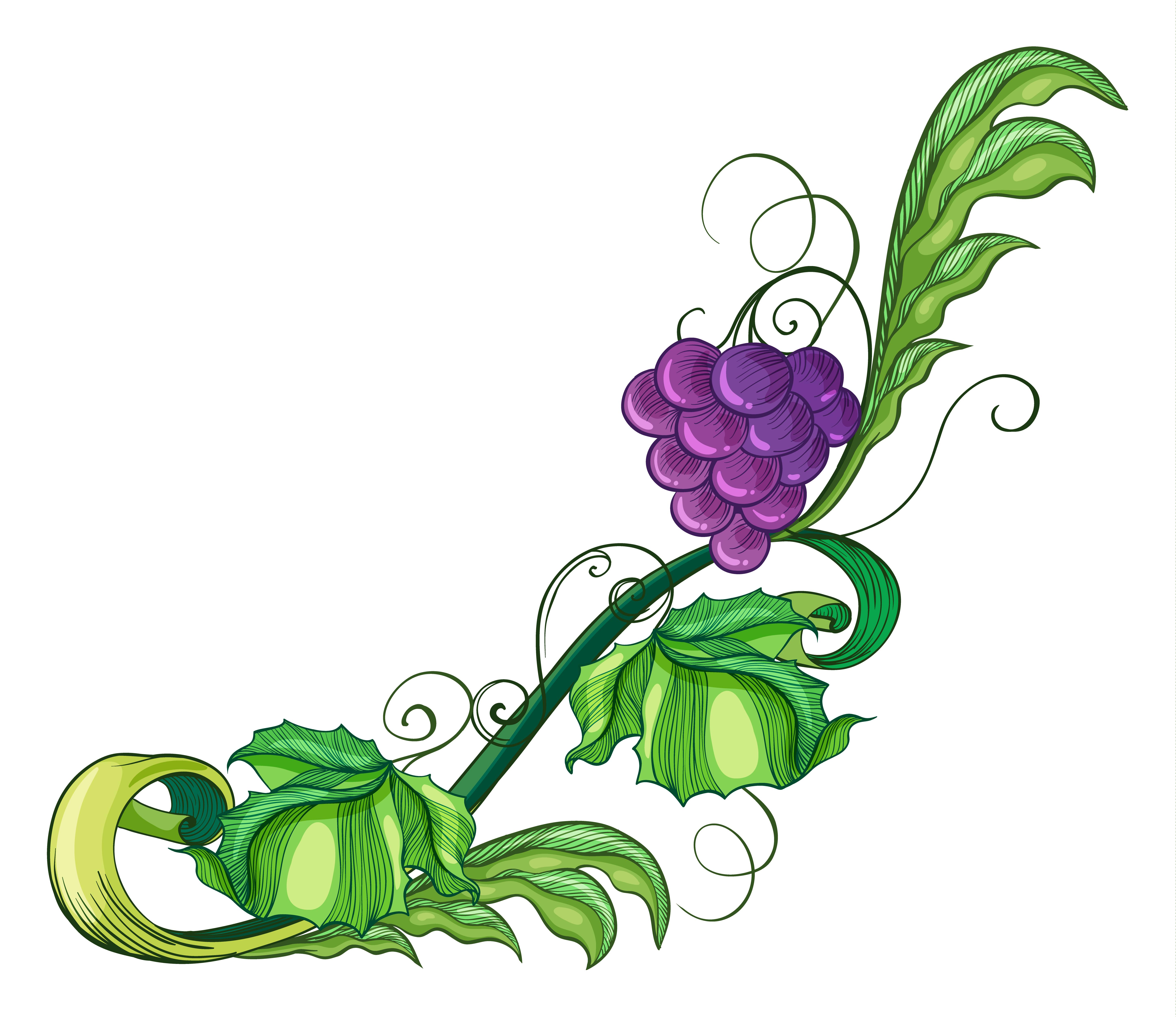 A Vine Fruit 414787 Vector Art At Vecteezy