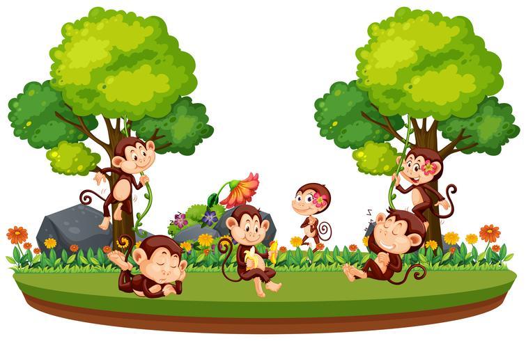 Mono salvaje en el bosque