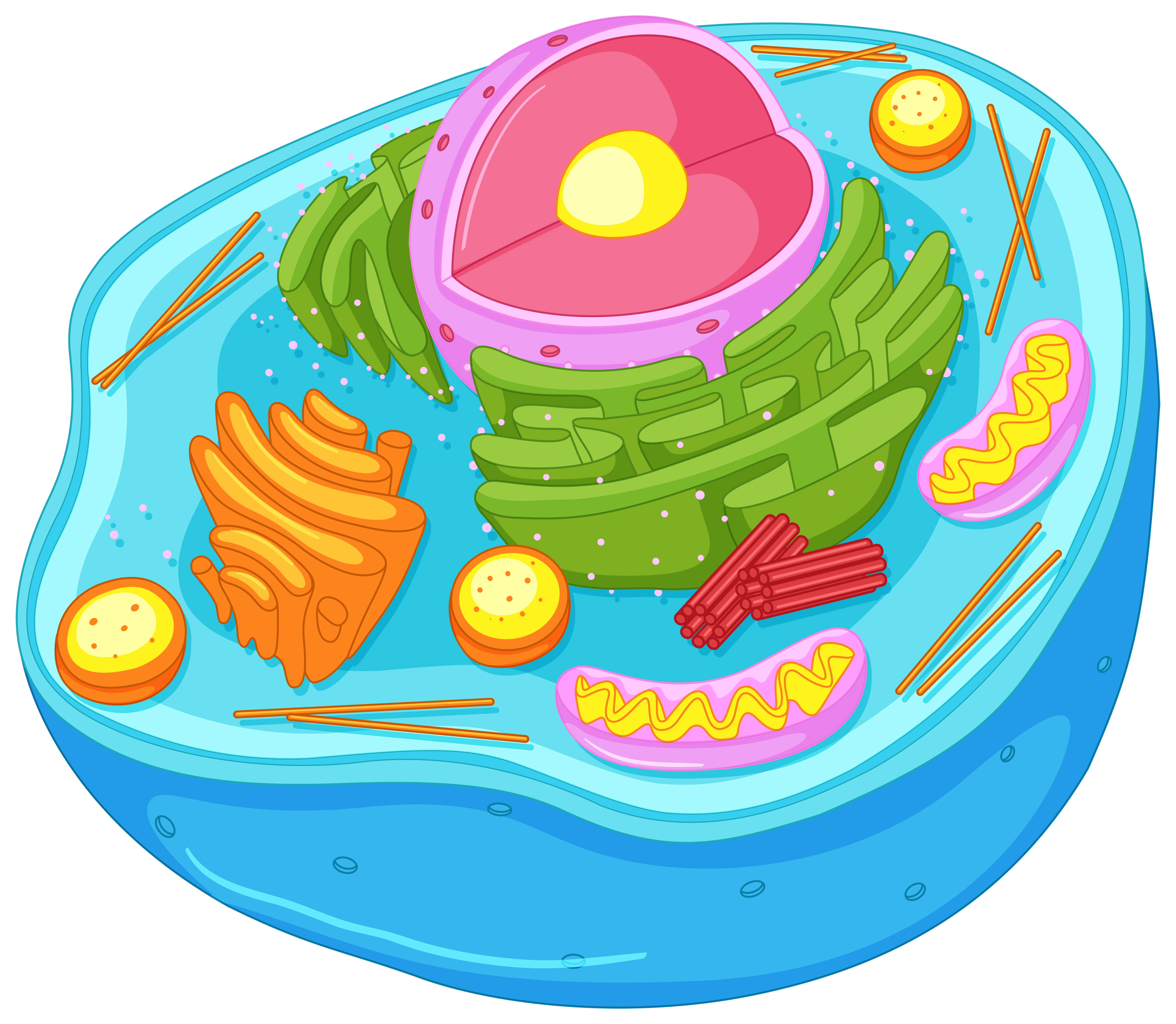 Close up diagram of animal cell - Download Free Vectors ...
