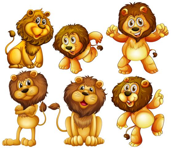 Conjunto de leones vector