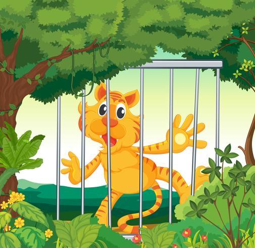 Een bos met een tijger in een kooi