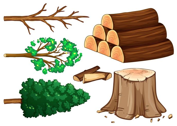 Tree and firewood on white background