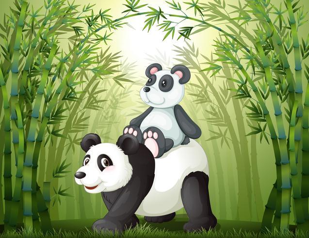 Twee panda's in het bamboebos