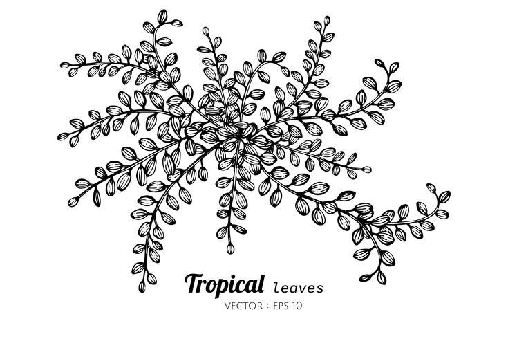 Tropiska löv ritande illustration.